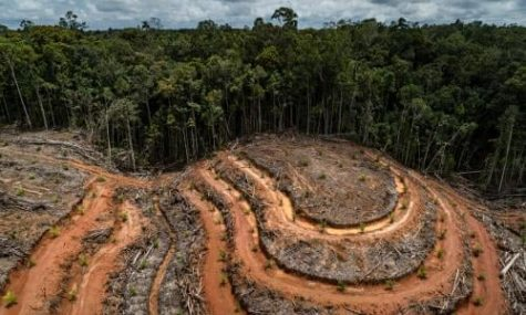The meat industry has caused the rapid deforestation of rainforests across the world
