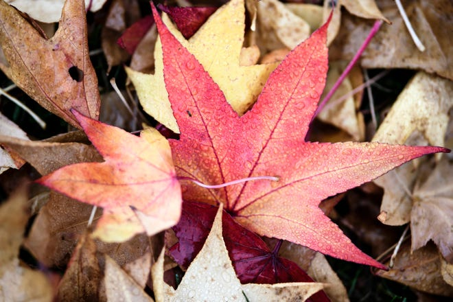 Did you know raking up your leaves and disposing of it can lead to the release of methane gas?