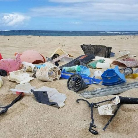 A beach clean-up is one of multiple environment-friendly project ideas junior AP English students can chose from.